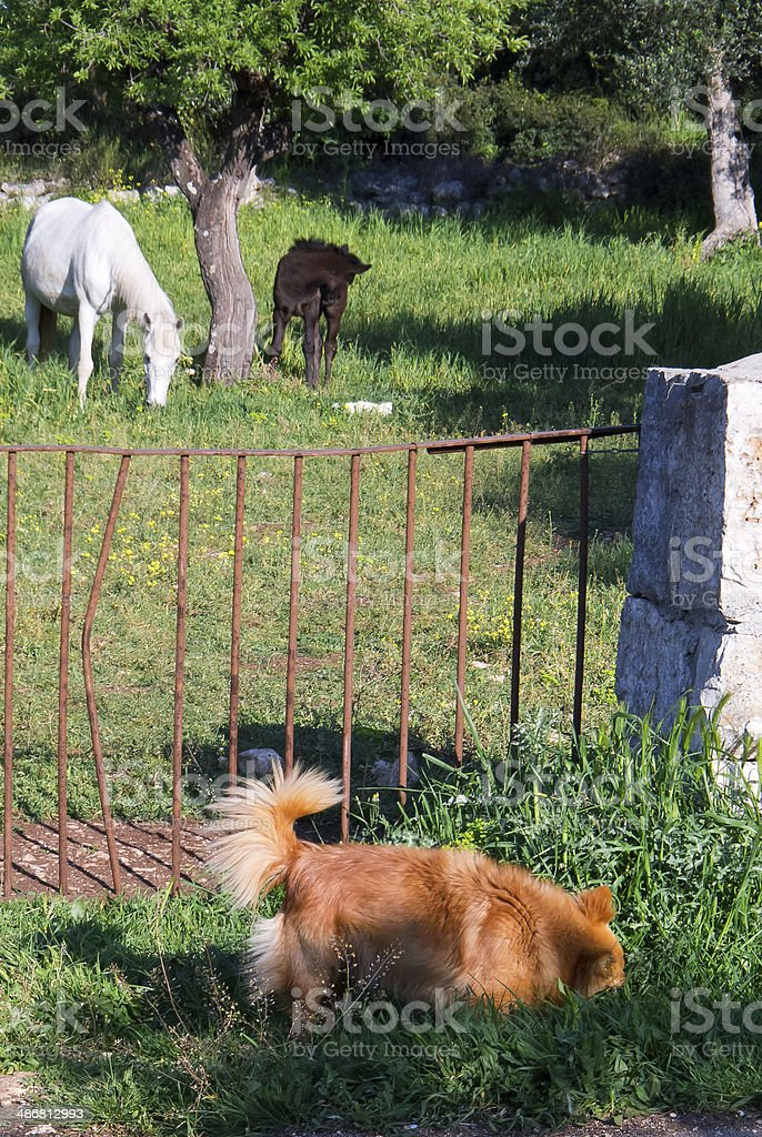 Horses and dog in country side. royalty-free stock photo