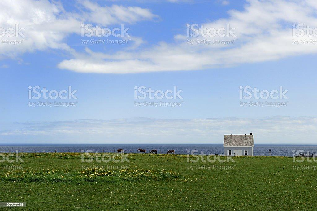 P.E.I. Horses and farm (prince edward island) stock photo