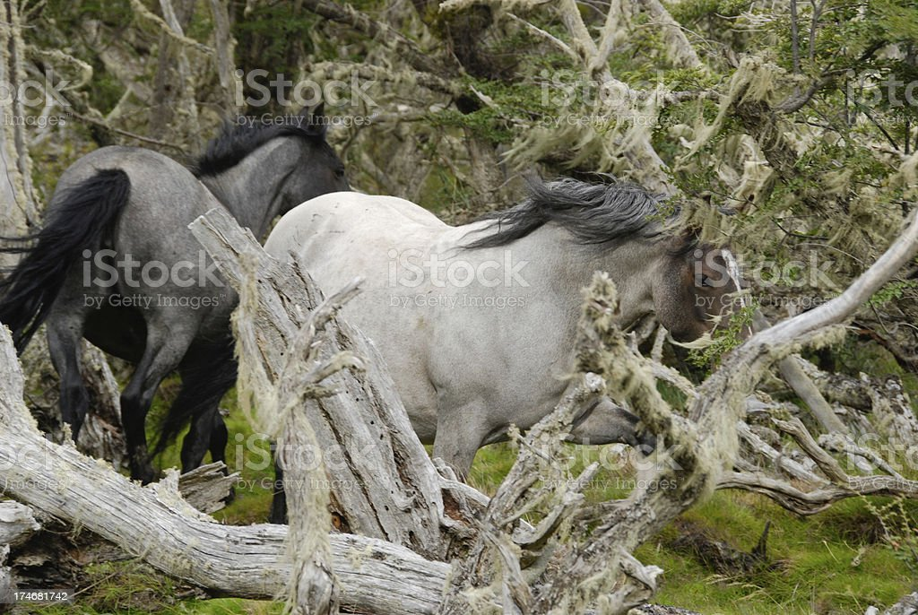 Horses and lichens stock photo