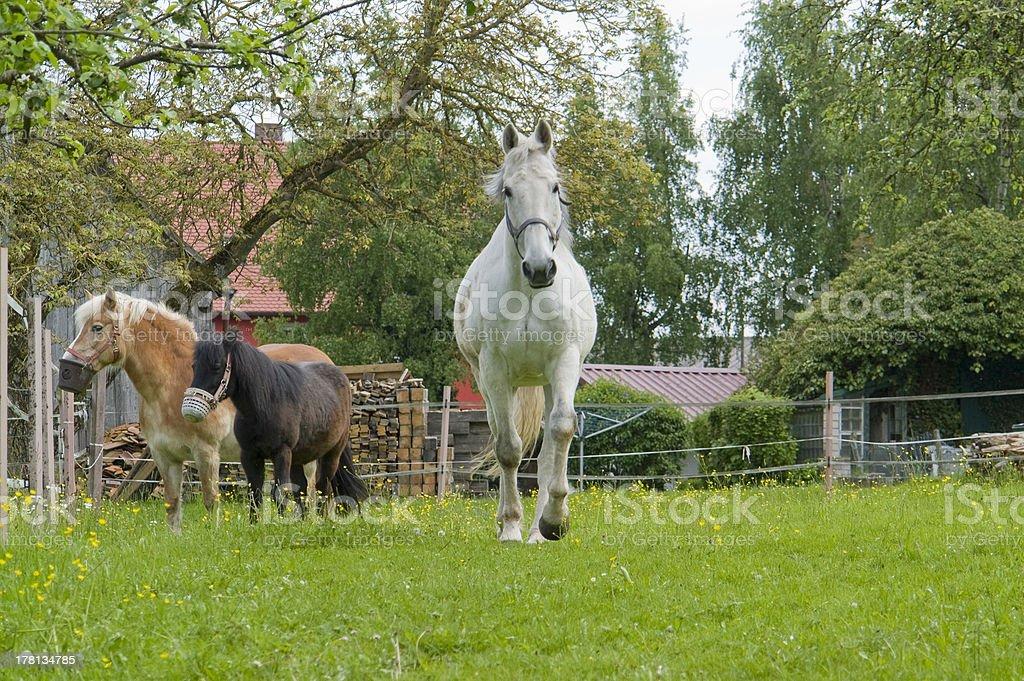 horses and paddock royalty-free stock photo