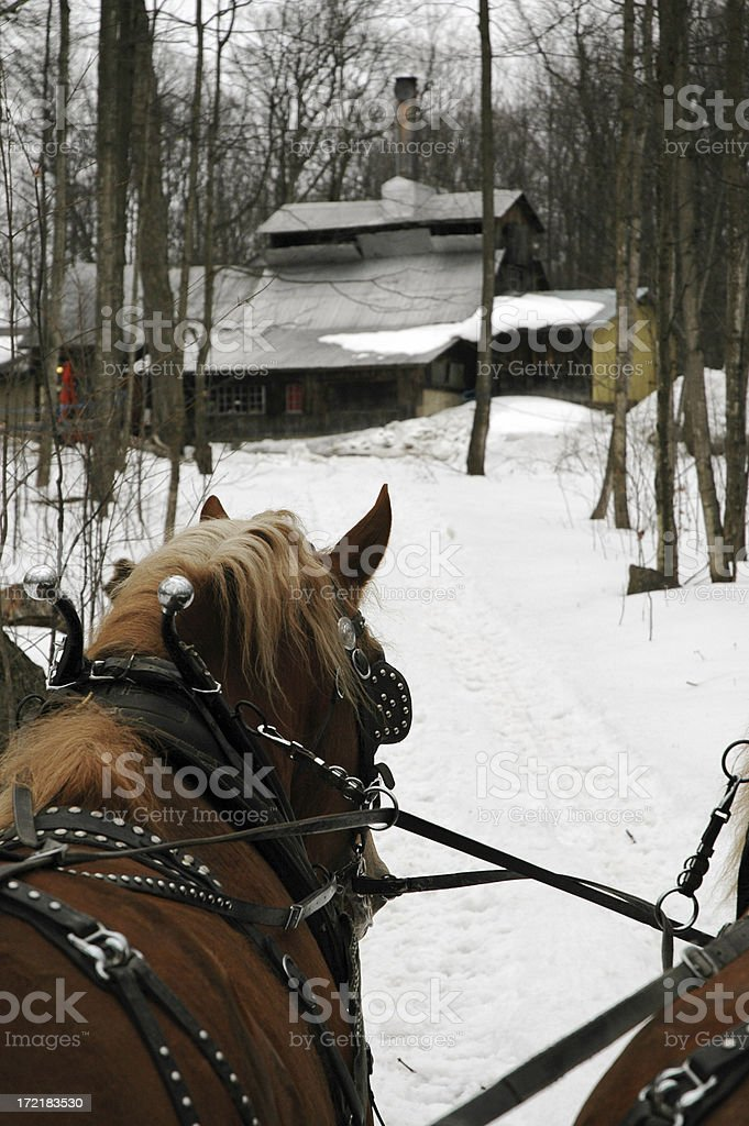 Horses and sugar shack royalty-free stock photo