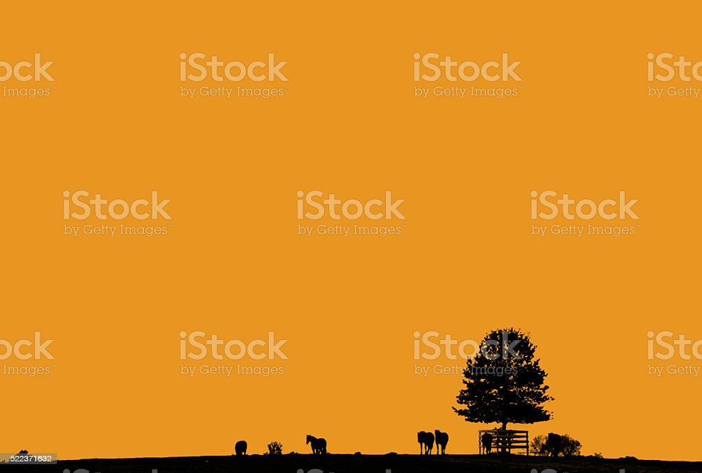 Horses and Tree with Orange Sky stock photo