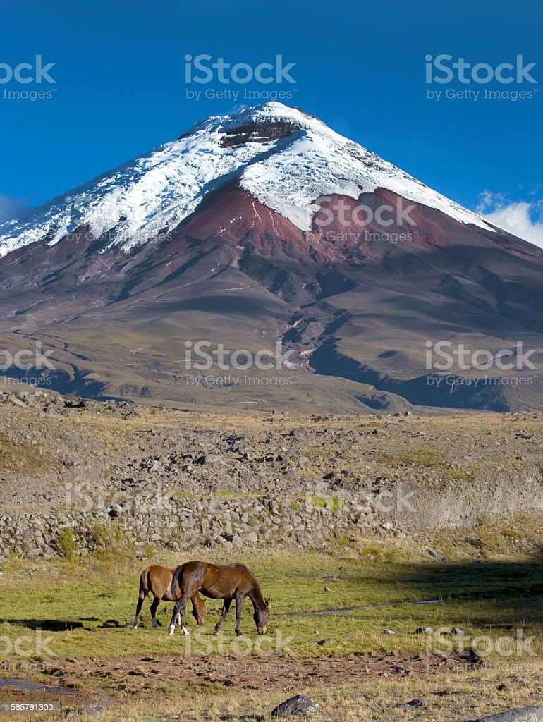 Horses and volcano stock photo