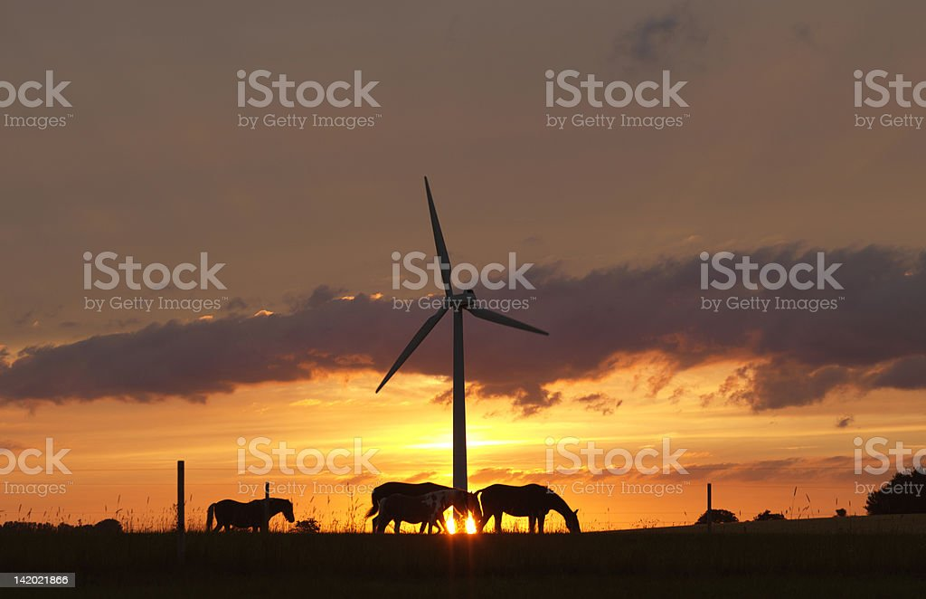 Horses and wind turbine at sunset stock photo