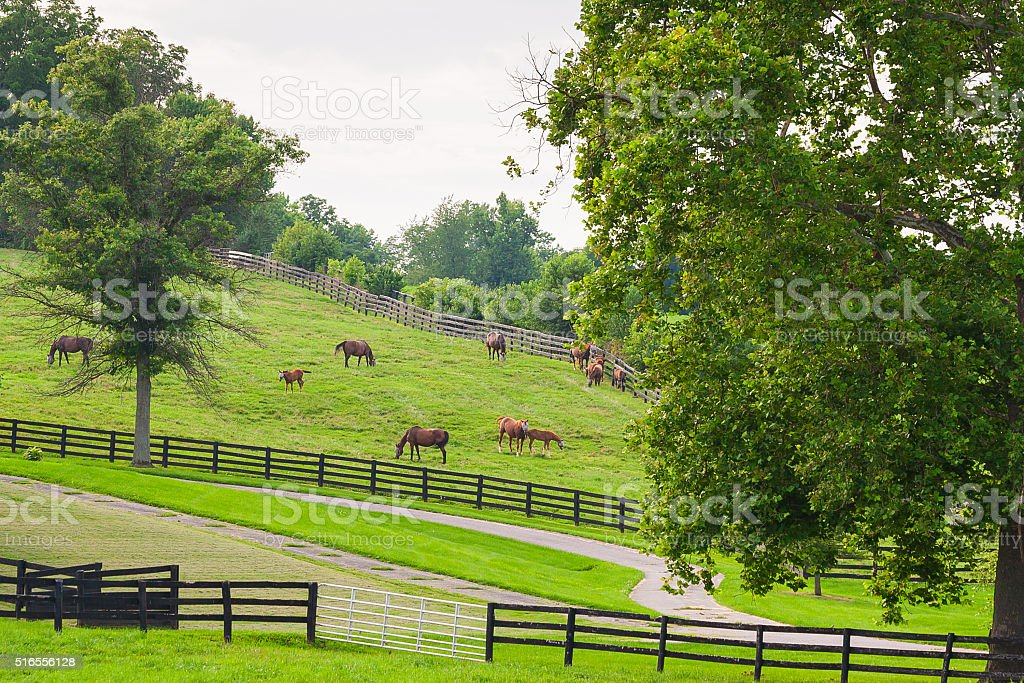 Horses at horse farm. Country landscape. stock photo