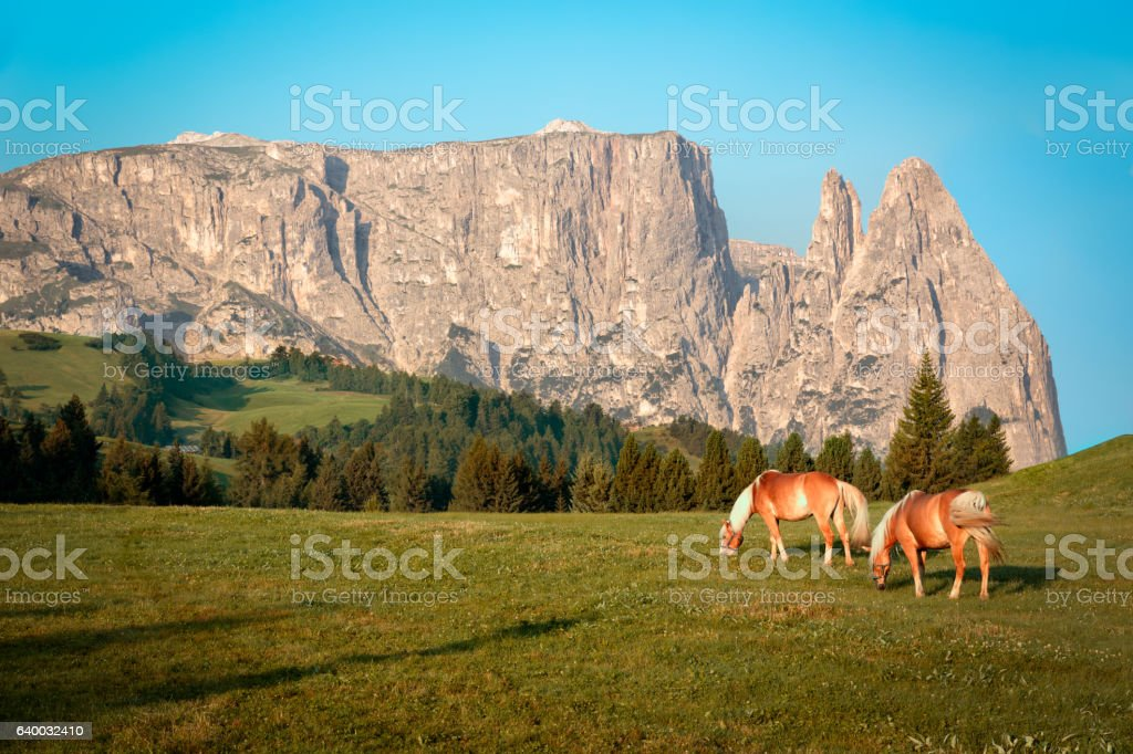 Horses at Seiser Alm, South Tyrol, Italy stock photo