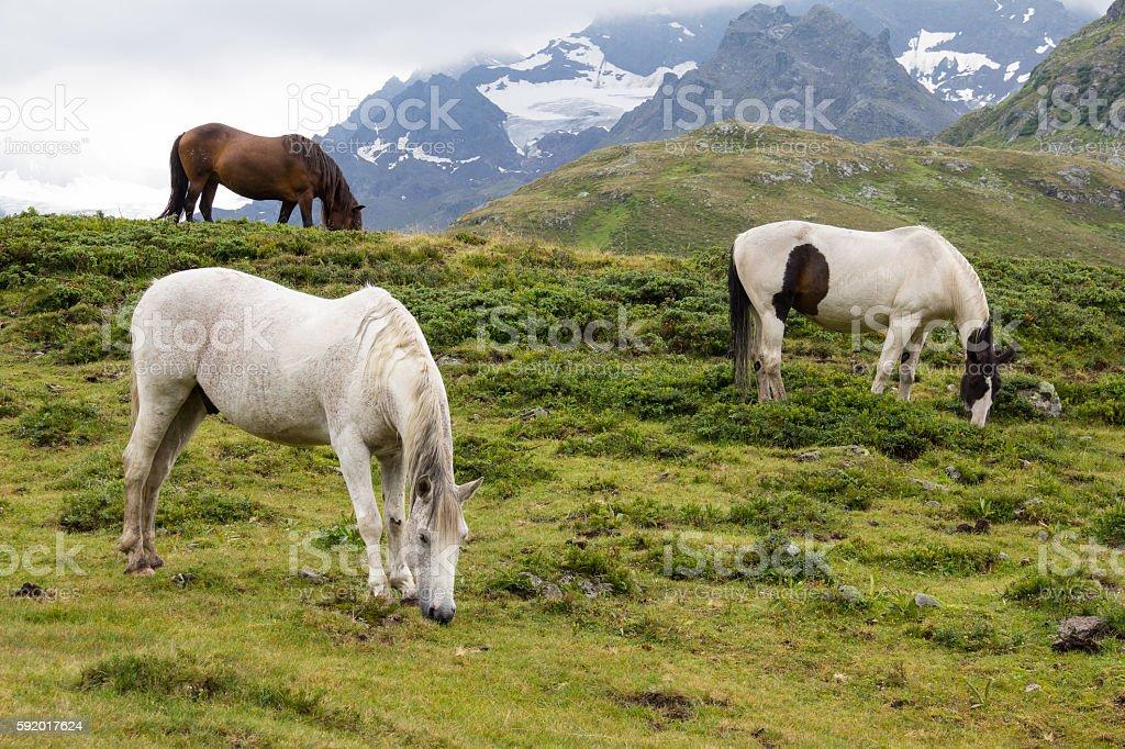 Horses At Silvretta High Alpine Road Vorarlberg Austria stock photo