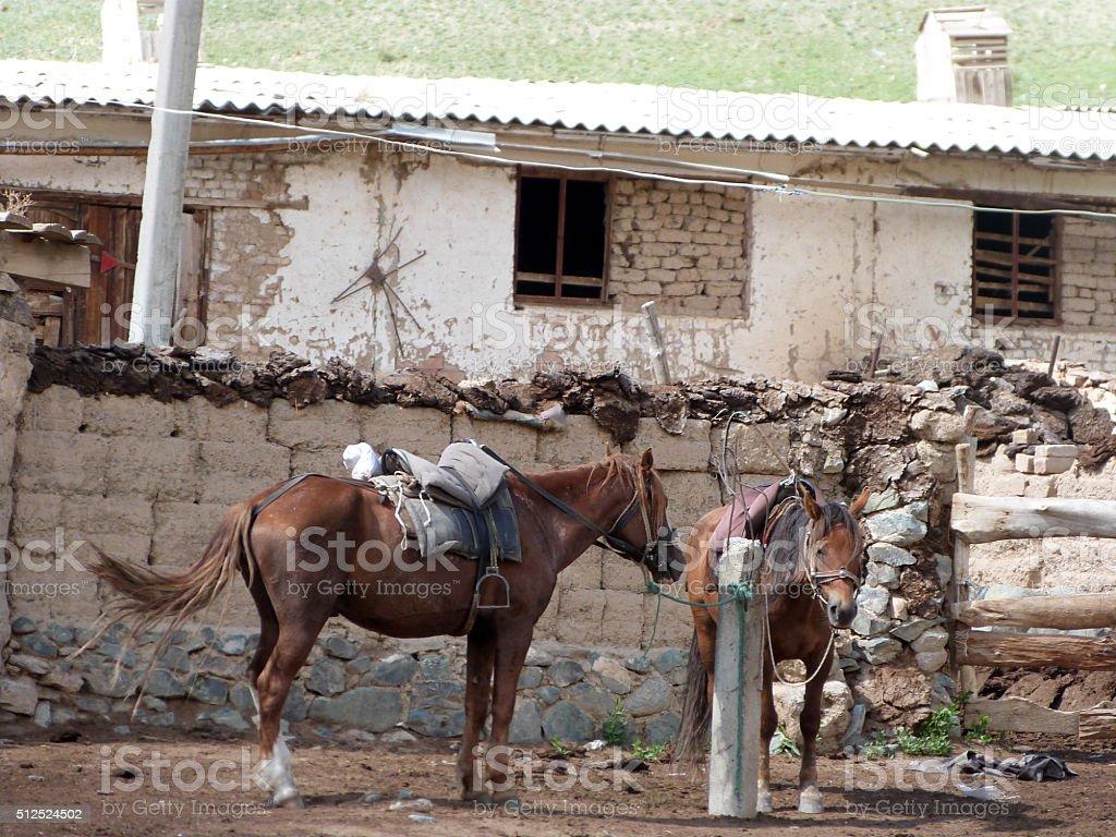 Pferde am Son Kul stock photo