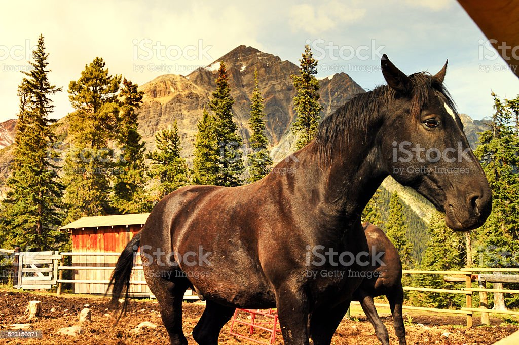 Horses at the ranch stock photo