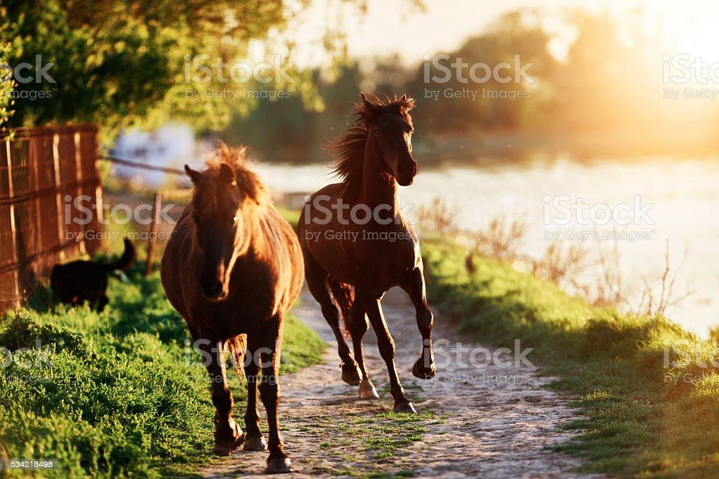 horses background stock photo