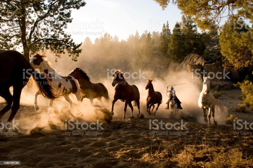 Horses Being Chased by Cowboy Through Desert stock photo