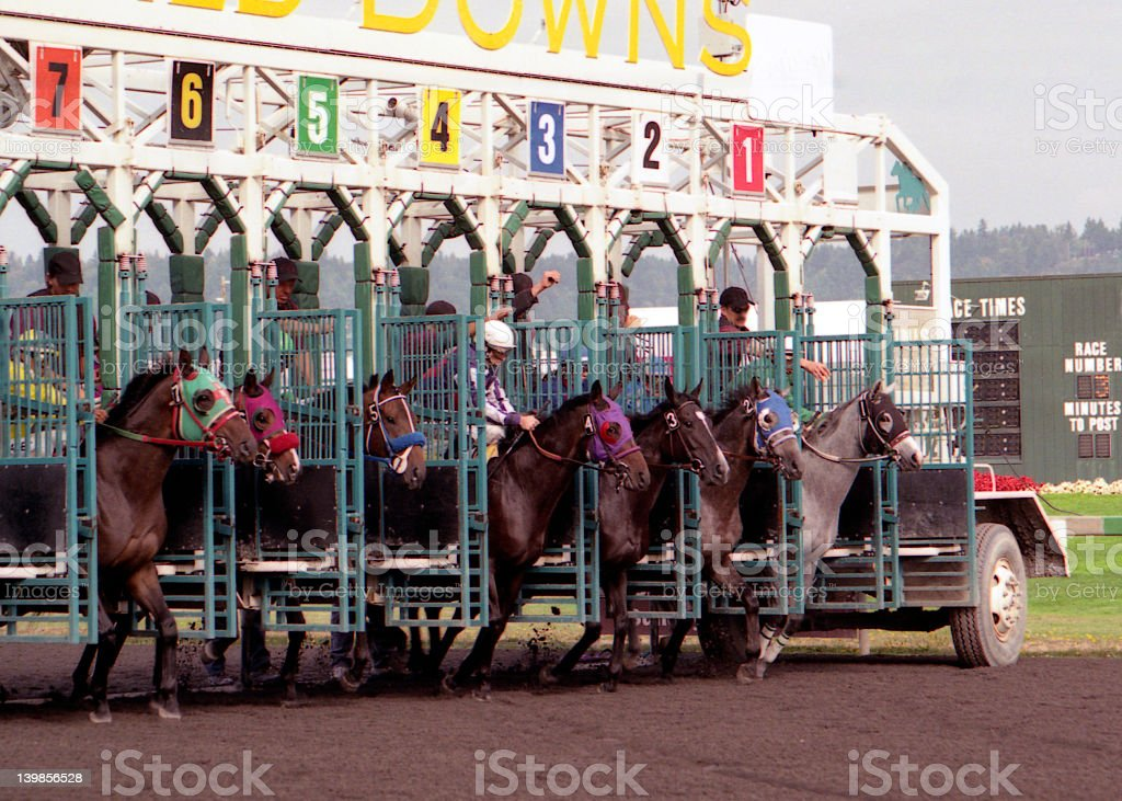 Horses being let out of a gate during a race on a track stock photo