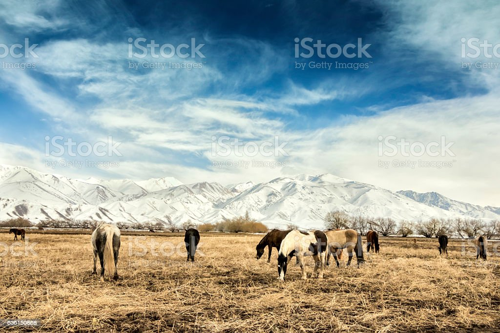 Horses breeding in Patagonia stock photo