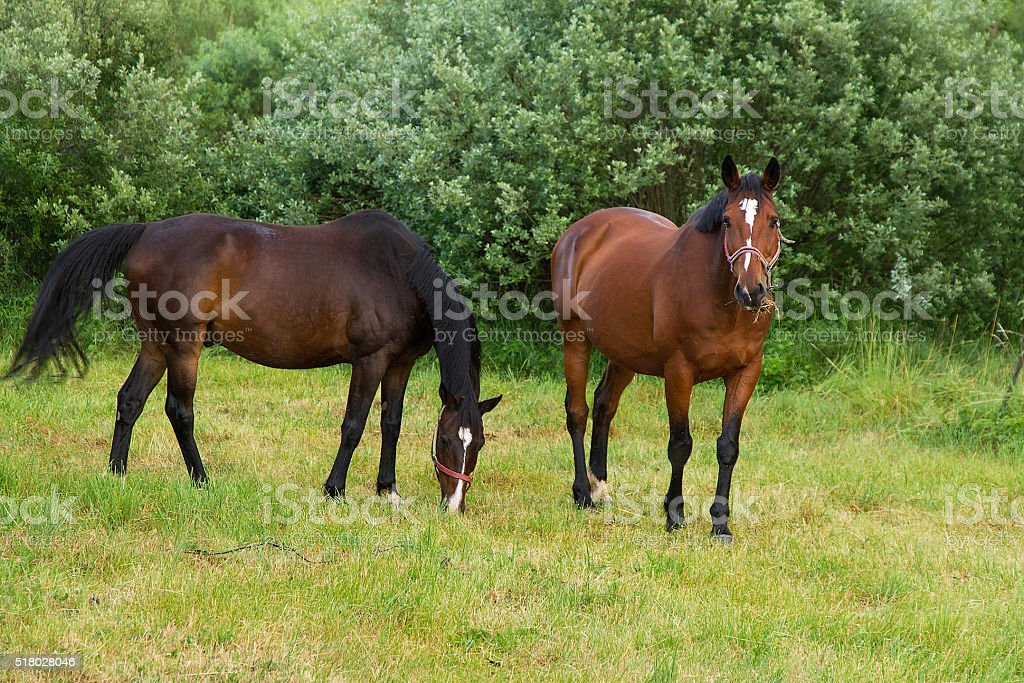 Horses - Caballos stock photo