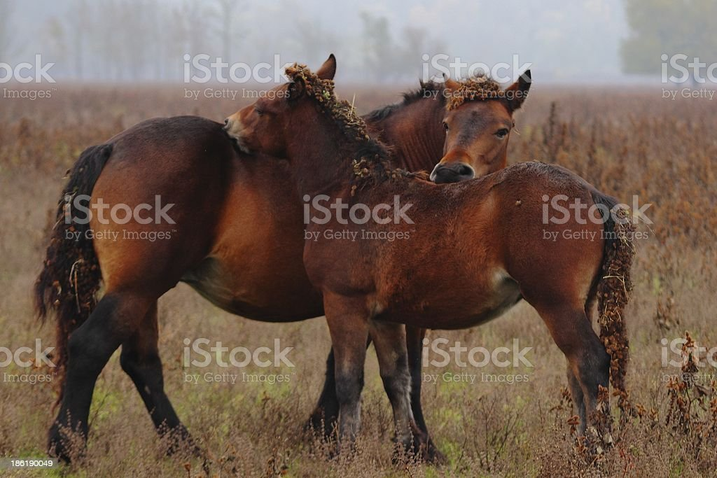 Horses cleaning stock photo