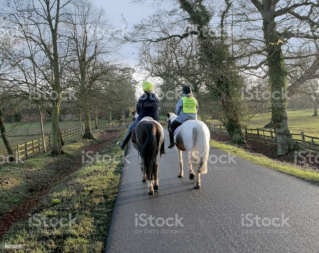horses country lane stock photo