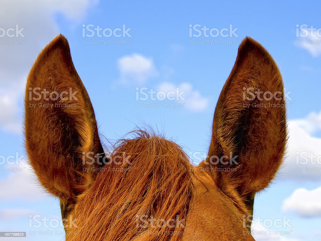 Horse's ears against the sky royalty-free stock photo