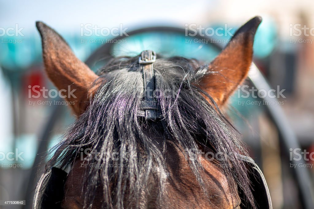 Horse's ears stock photo