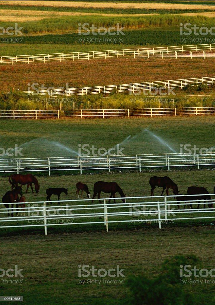 Horses & Farm 2 stock photo