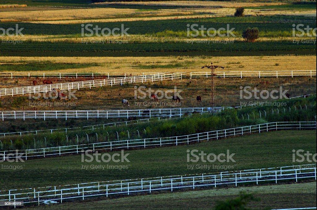 Horses & Farm stock photo
