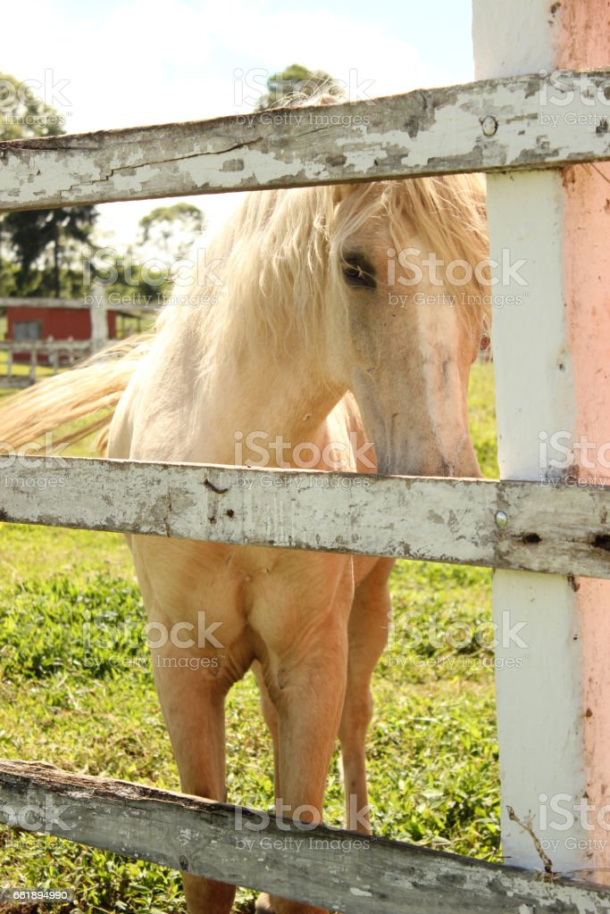 Horses farmhouse stock photo