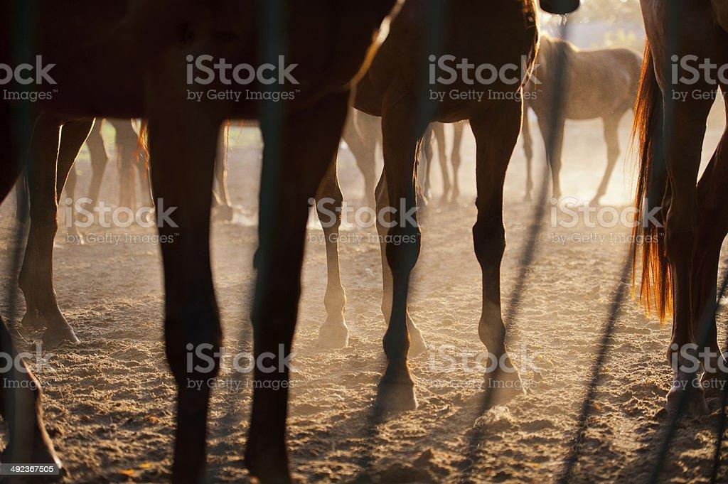horses' feet royalty-free stock photo