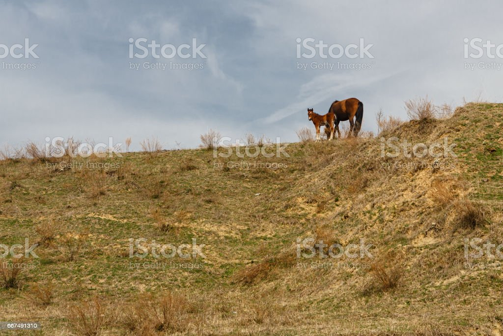 Horses grazed on a mountain slope stock photo