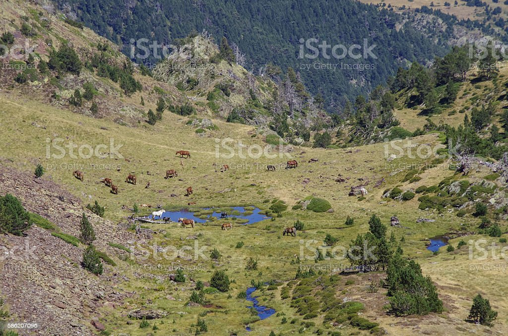 Horses grazes on meadow in mountain valley stock photo