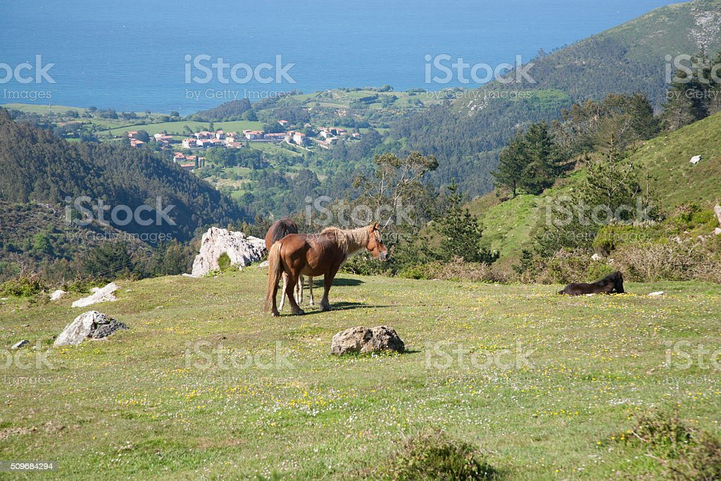 horses grazing at meadow stock photo