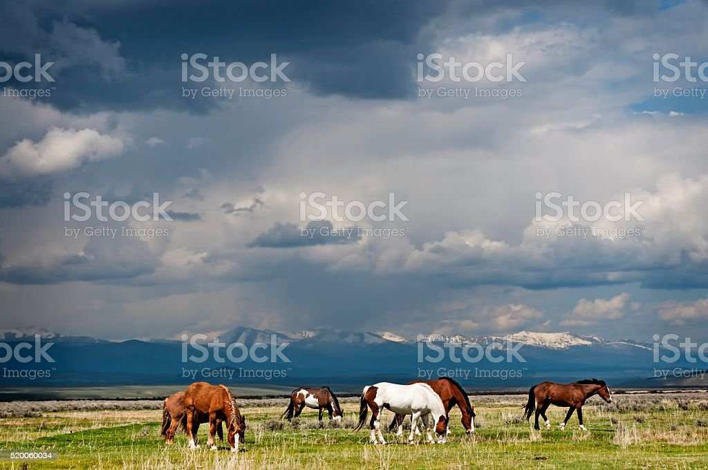 Horses Grazing before the Storm stock photo