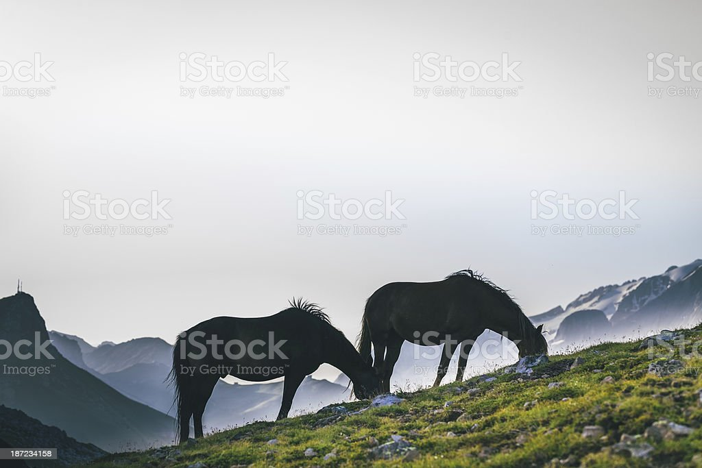 Horses grazing, Dolomites royalty-free stock photo
