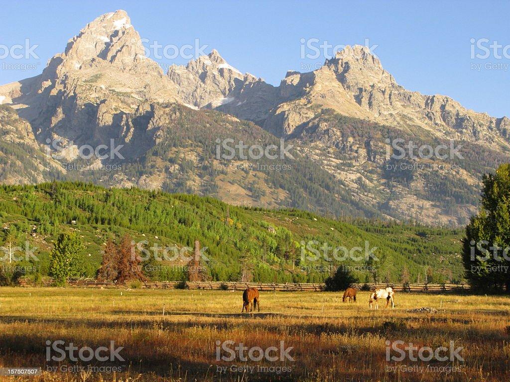 Horses Grazing  Grand Teton National Park royalty-free stock photo