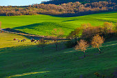 Horses grazing in green pasture