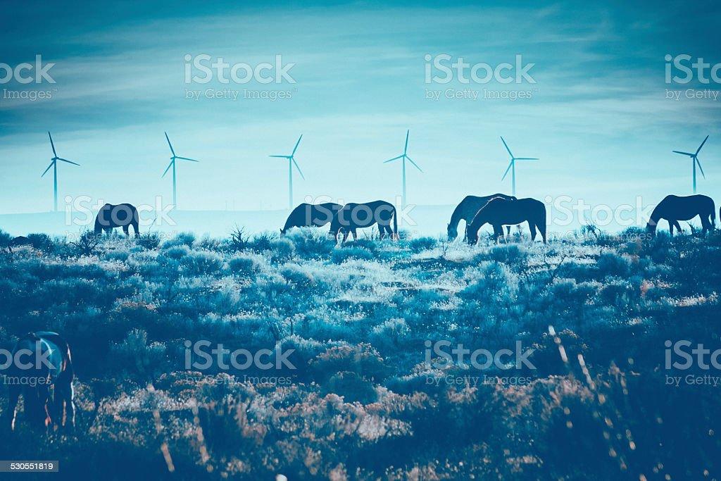 Horses grazing in winter landscape scenic & wind turbine background stock photo