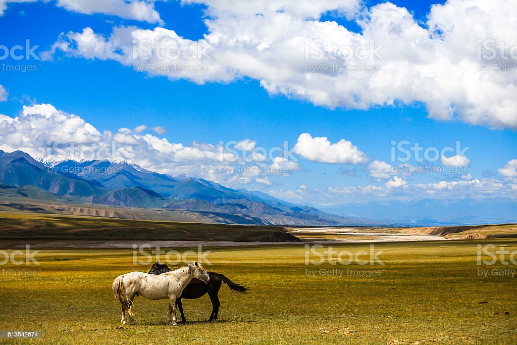 Horses grazing on the plain, mountain landscape stock photo