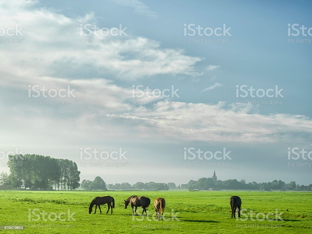 Horses Herding In Meadow Near Amsterdam, The Netherlands stock photo