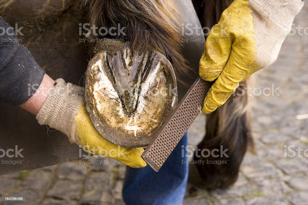 Horse's Hoof Manicure royalty-free stock photo