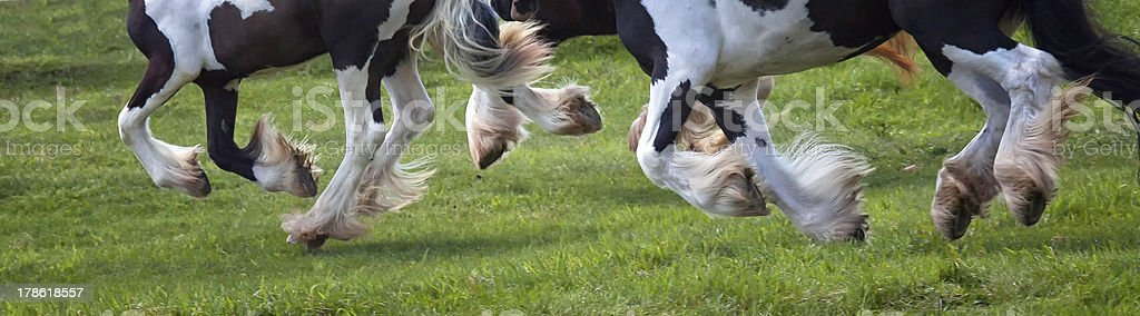 Horses Hooves In Motion stock photo