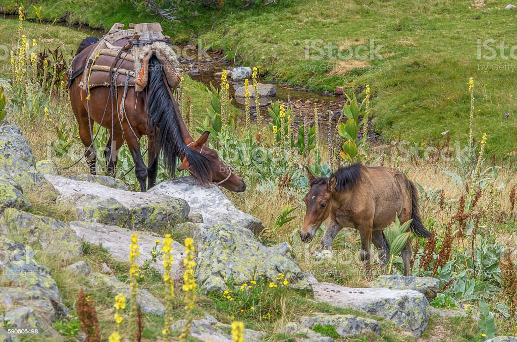 Horses in a green mountain royalty-free stock photo