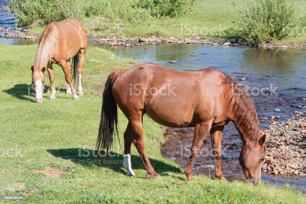 Horses In a Meadow on a Sunny Day stock photo