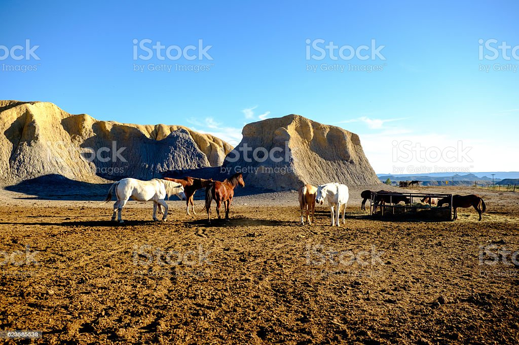horses in a paddock bask in the afternoon sun stock photo