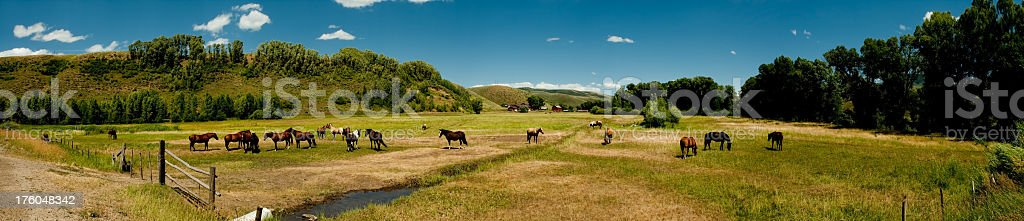 Horses in a Pasture Pano royalty-free stock photo