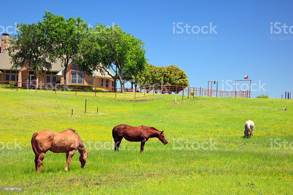 Horses in a ranch on s sunny day royalty-free stock photo