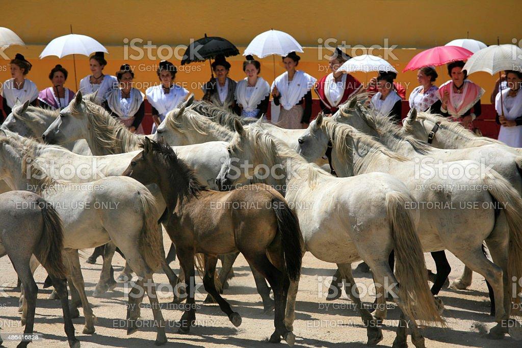 Horses in arena, Saintes-Maries-de-la-Mer, Camargue, France stock photo