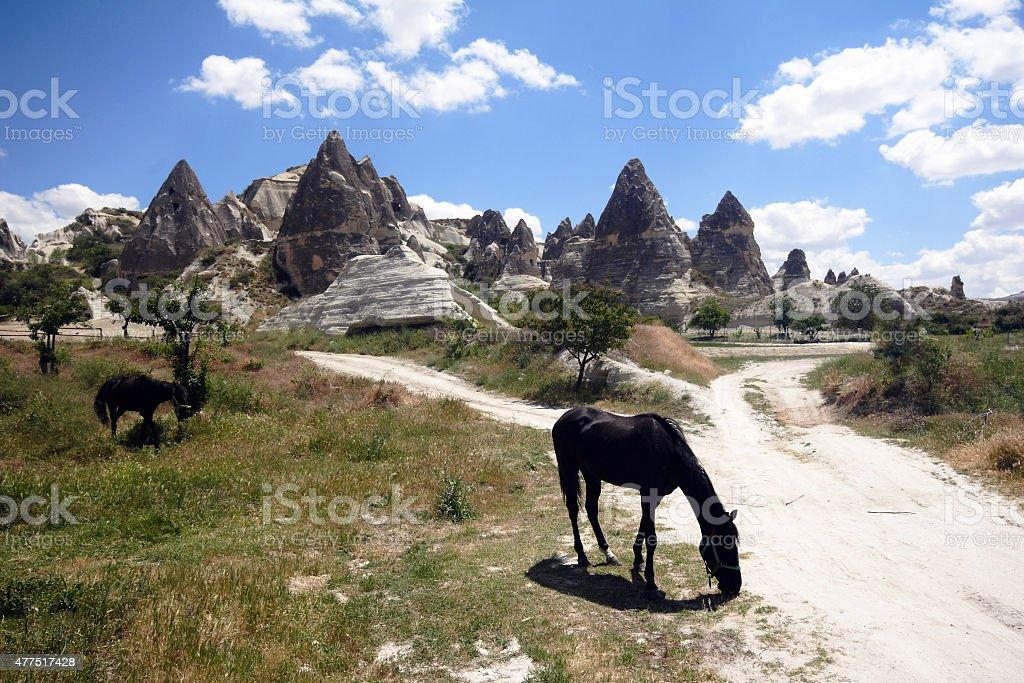 Horses in Cappadocia, Turkey stock photo
