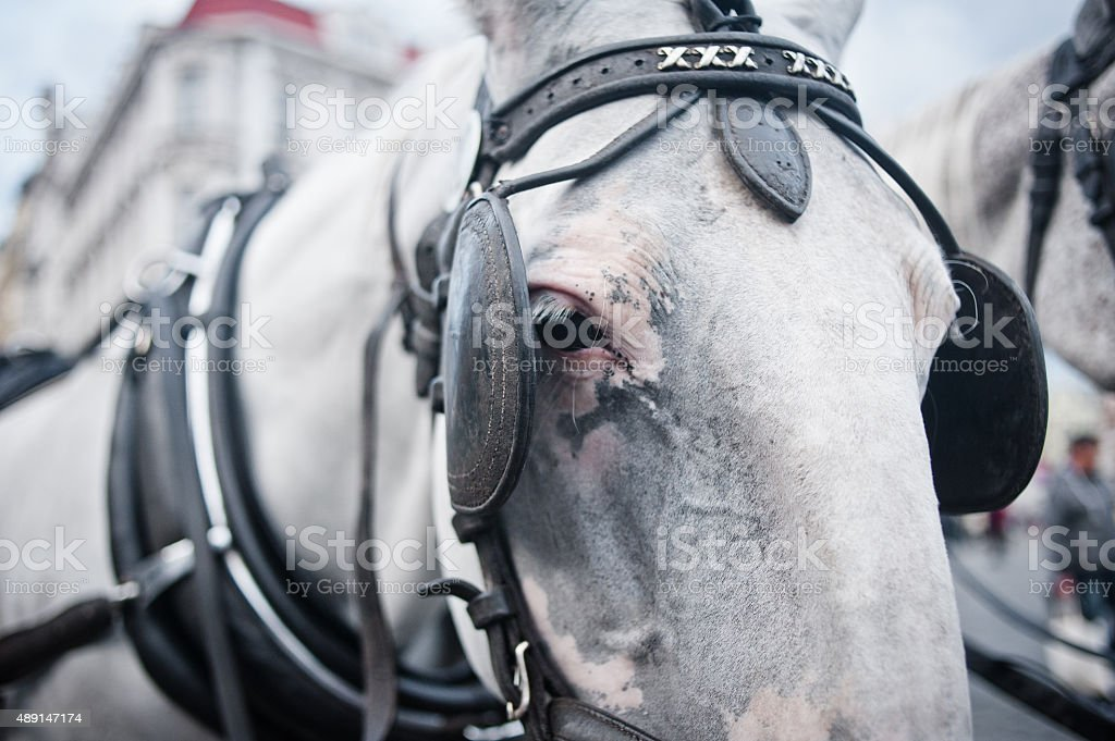 Horses in carriage closeup stock photo