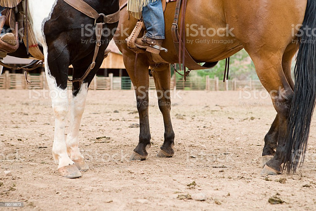 Horses in corral royalty-free stock photo