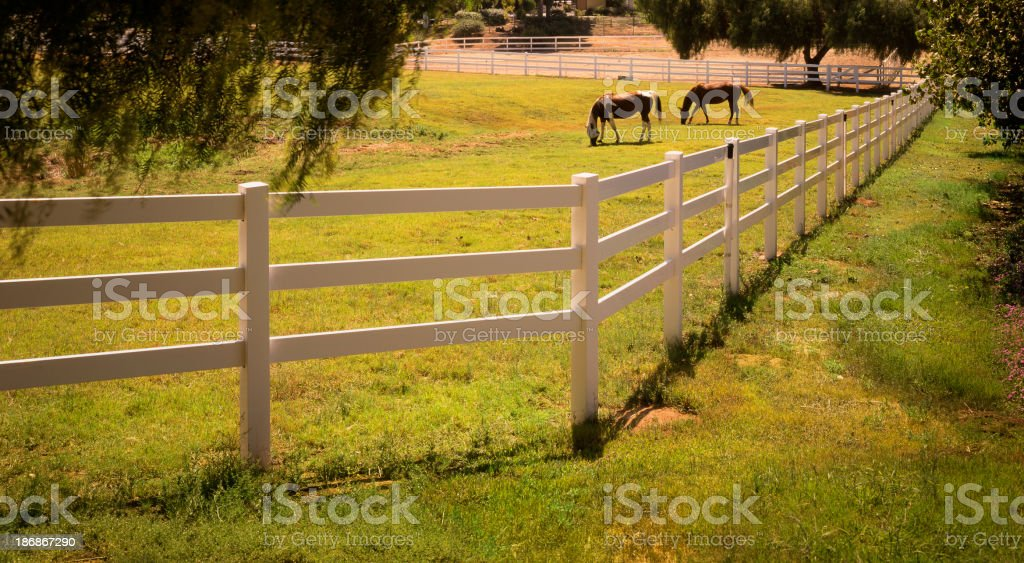Horses in field royalty-free stock photo