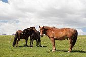 Horses in grasslands