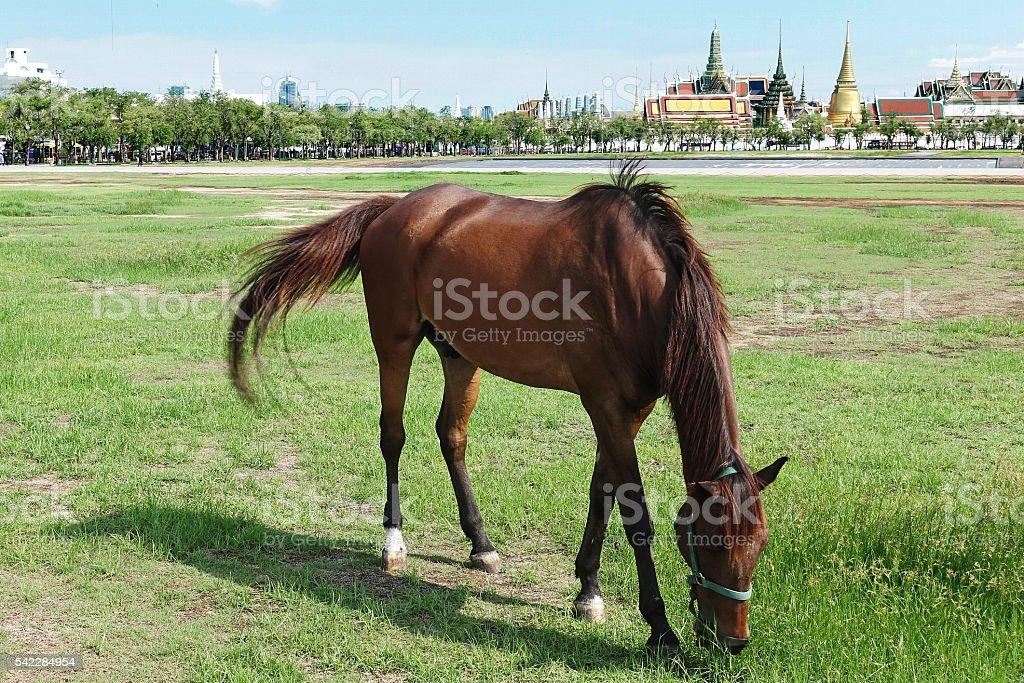 Horses in meadow stock photo